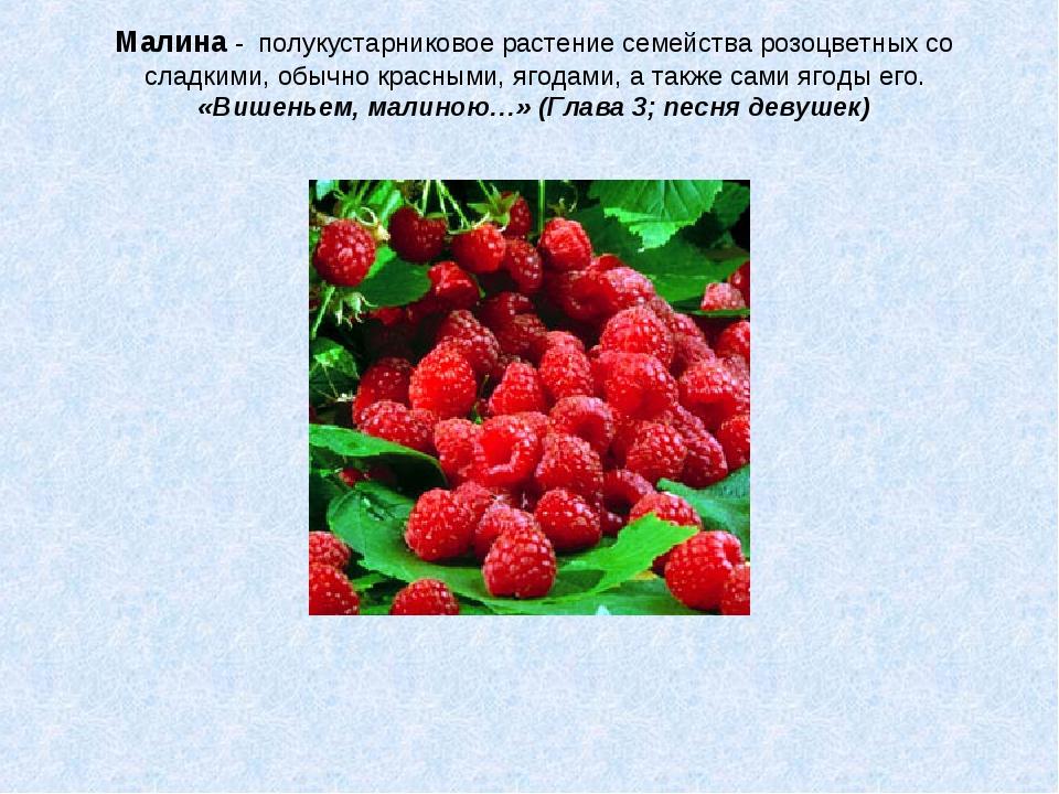 Малина - полукустарниковое растение семейства розоцветных со сладкими, обычно...