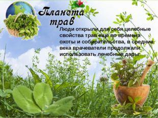 Люди открыли для себя целебные свойства трав еще во времена охоты и собирател