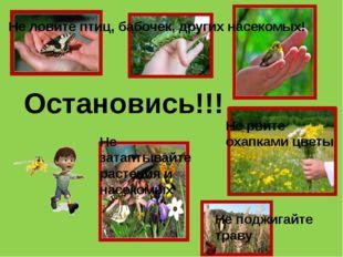 Остановись!!! Не ловите птиц, бабочек, других насекомых! Не рвите охапками цв