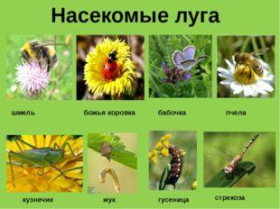 Насекомые луга шмель божья коровка бабочка пчела кузнечик жук гусеница стрекоза