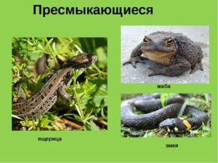 Пресмыкающиеся ящерица жаба змея