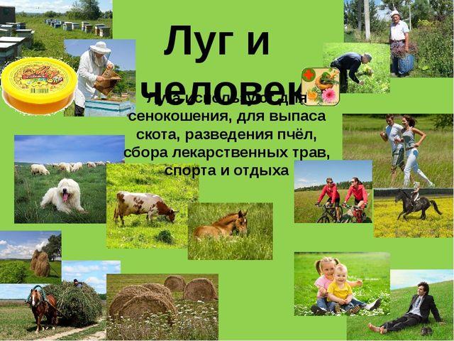 Луг и человек Луга используют для сенокошения, для выпаса скота, разведения п...