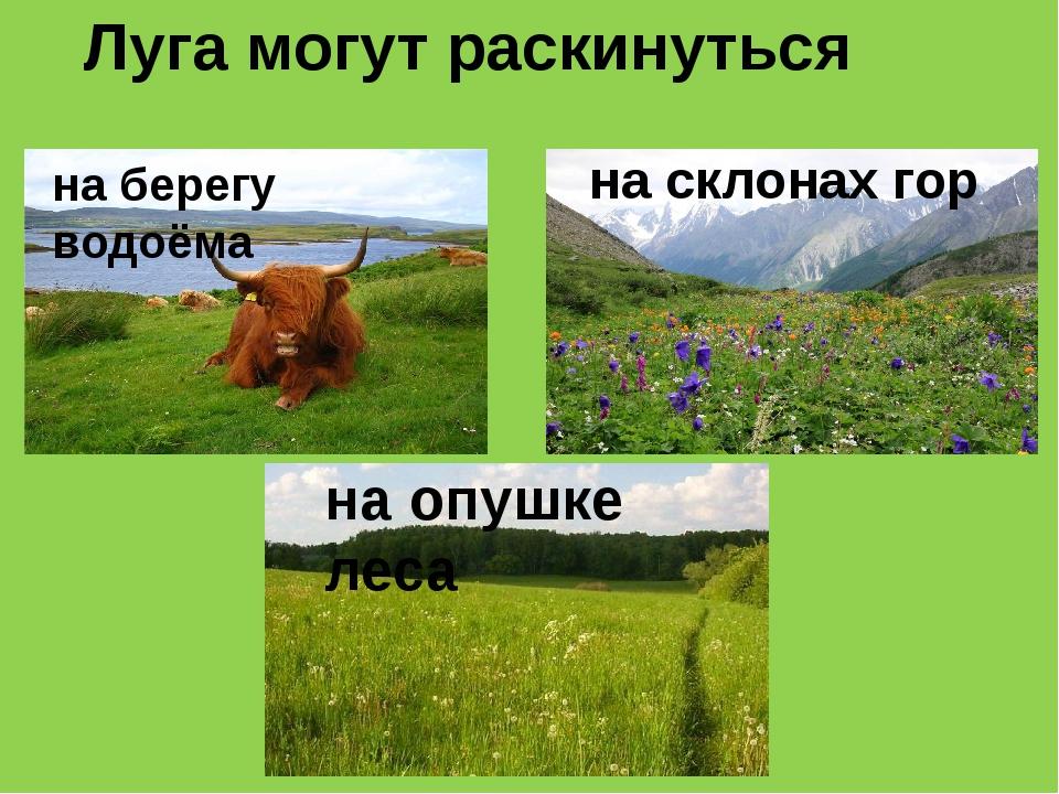 Луга могут раскинуться на берегу водоёма на склонах гор на опушке леса