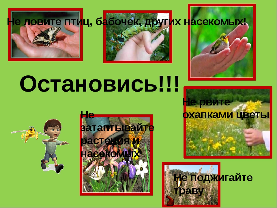 Остановись!!! Не ловите птиц, бабочек, других насекомых! Не рвите охапками цв...