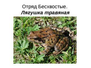Отряд Бесхвостые. Лягушка травяная