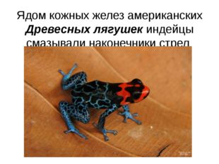 Ядом кожных желез американских Древесных лягушек индейцы смазывали наконечник