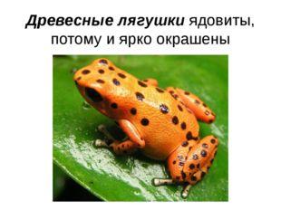 Древесные лягушки ядовиты, потому и ярко окрашены