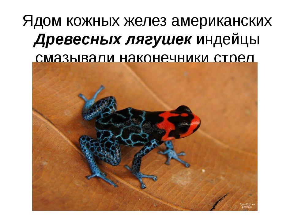 Ядом кожных желез американских Древесных лягушек индейцы смазывали наконечник...