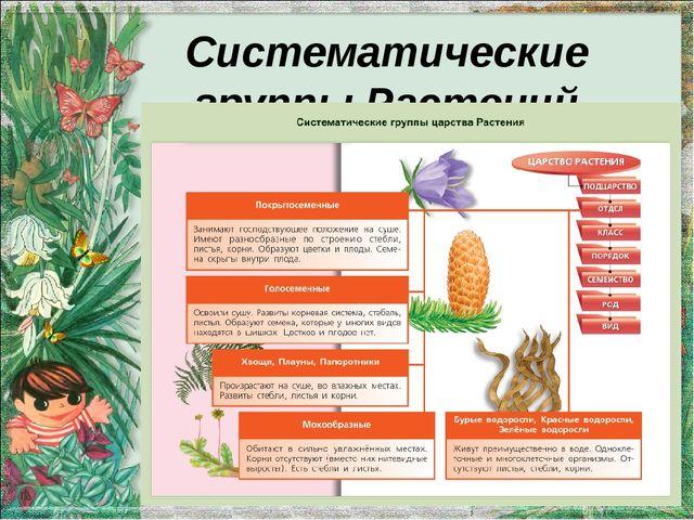 Систематические группы Растений