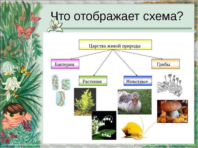 Что отображает схема? Царства живой природы Бактерии Растения Животные Грибы