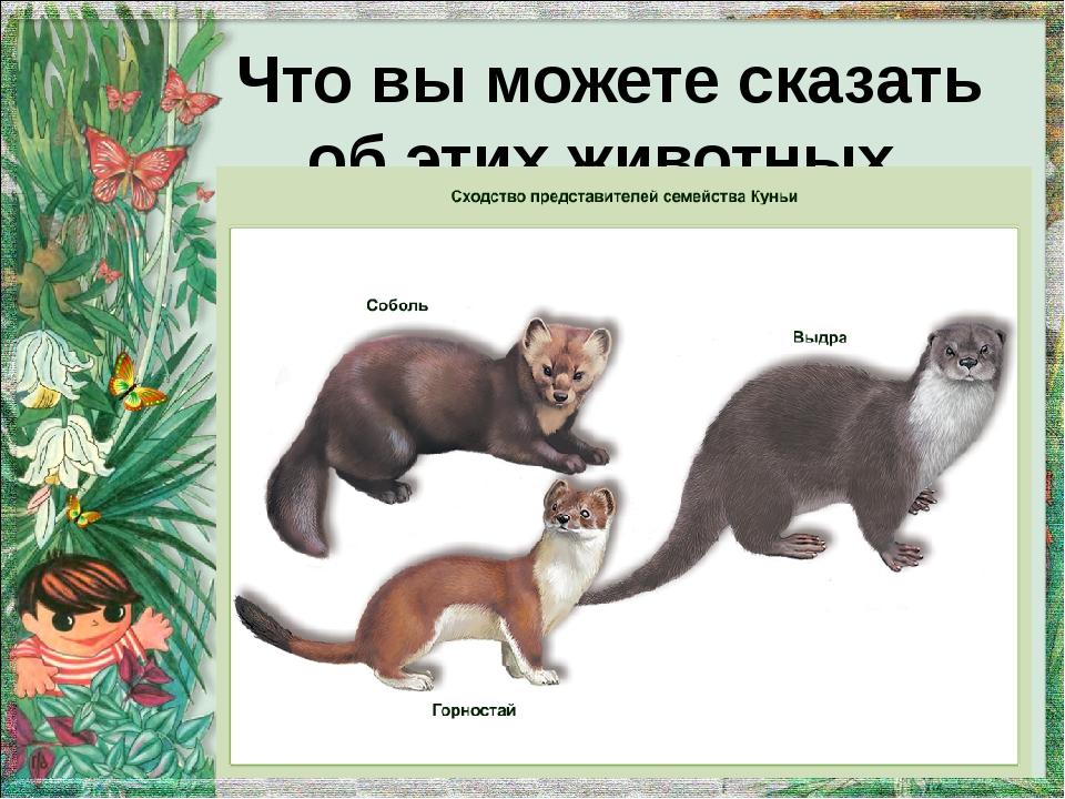 Что вы можете сказать об этих животных.