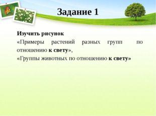 Задание 1 Изучить рисунок «Примеры растений разных групп по отношению к свету