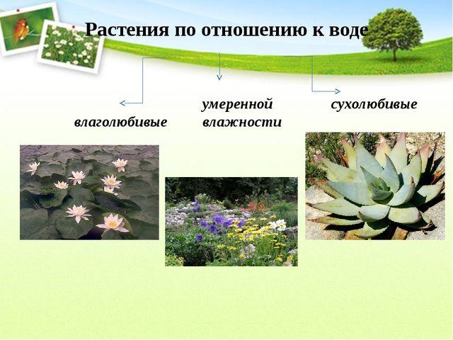 Растения по отношению к воде влаголюбивые умеренной влажности сухолюбивые