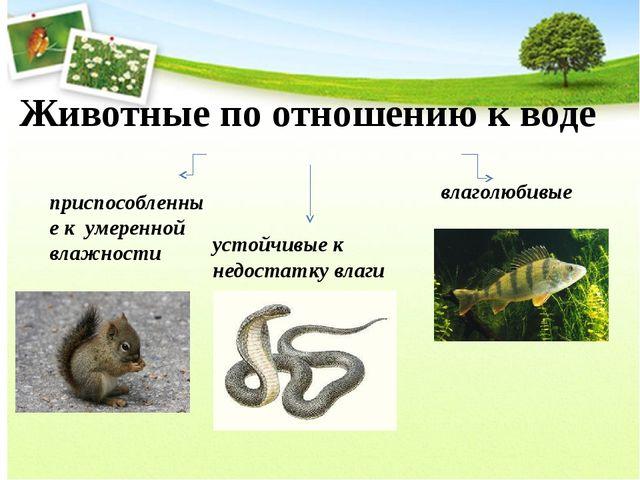 Животные по отношению к воде устойчивые к недостатку влаги приспособленные к...