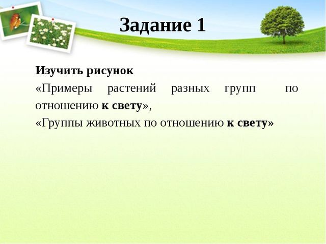 Задание 1 Изучить рисунок «Примеры растений разных групп по отношению к свету...