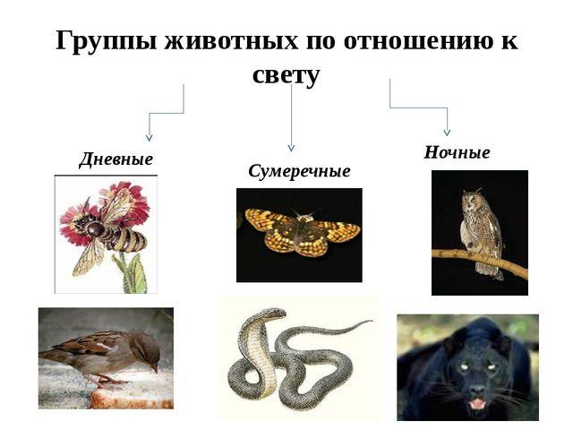 Группы животных по отношению к свету Дневные Сумеречные Ночные