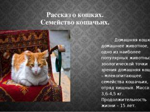 Рассказ о кошках. Семейство кошачьих. Домашняя кошка – домашнее животное, одн