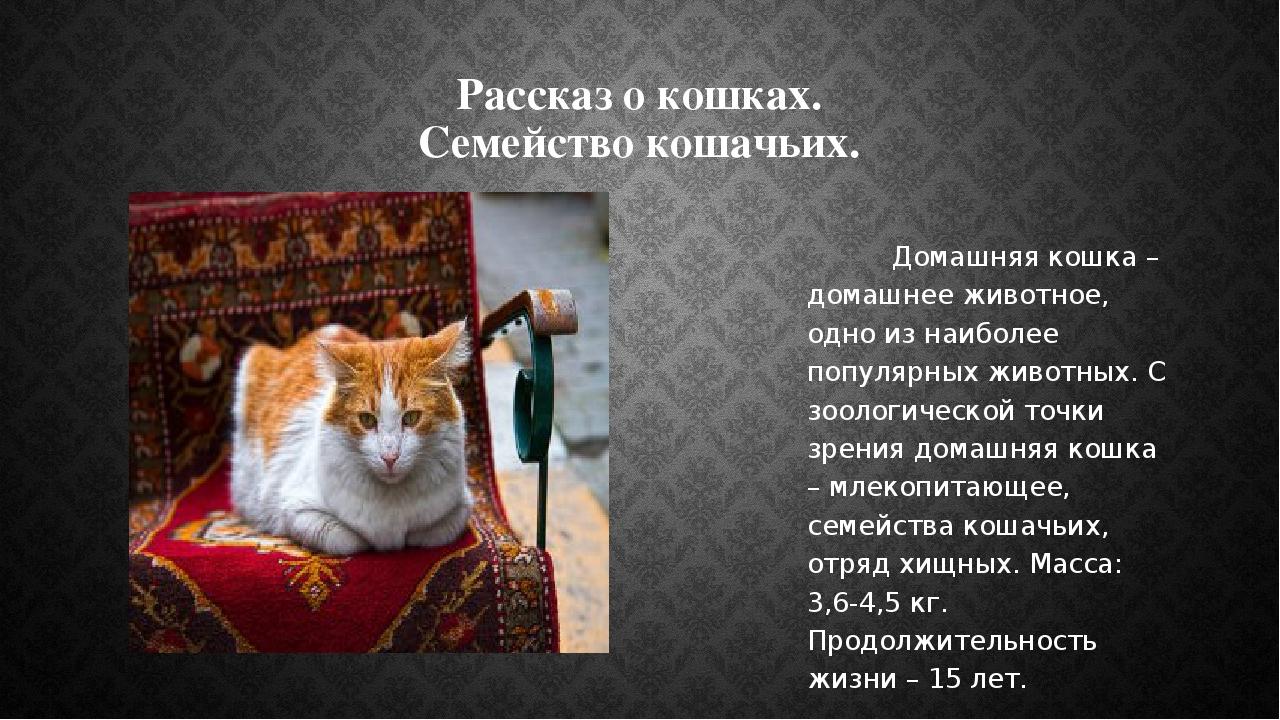 Рассказ о кошках. Семейство кошачьих. Домашняя кошка – домашнее животное, одн...