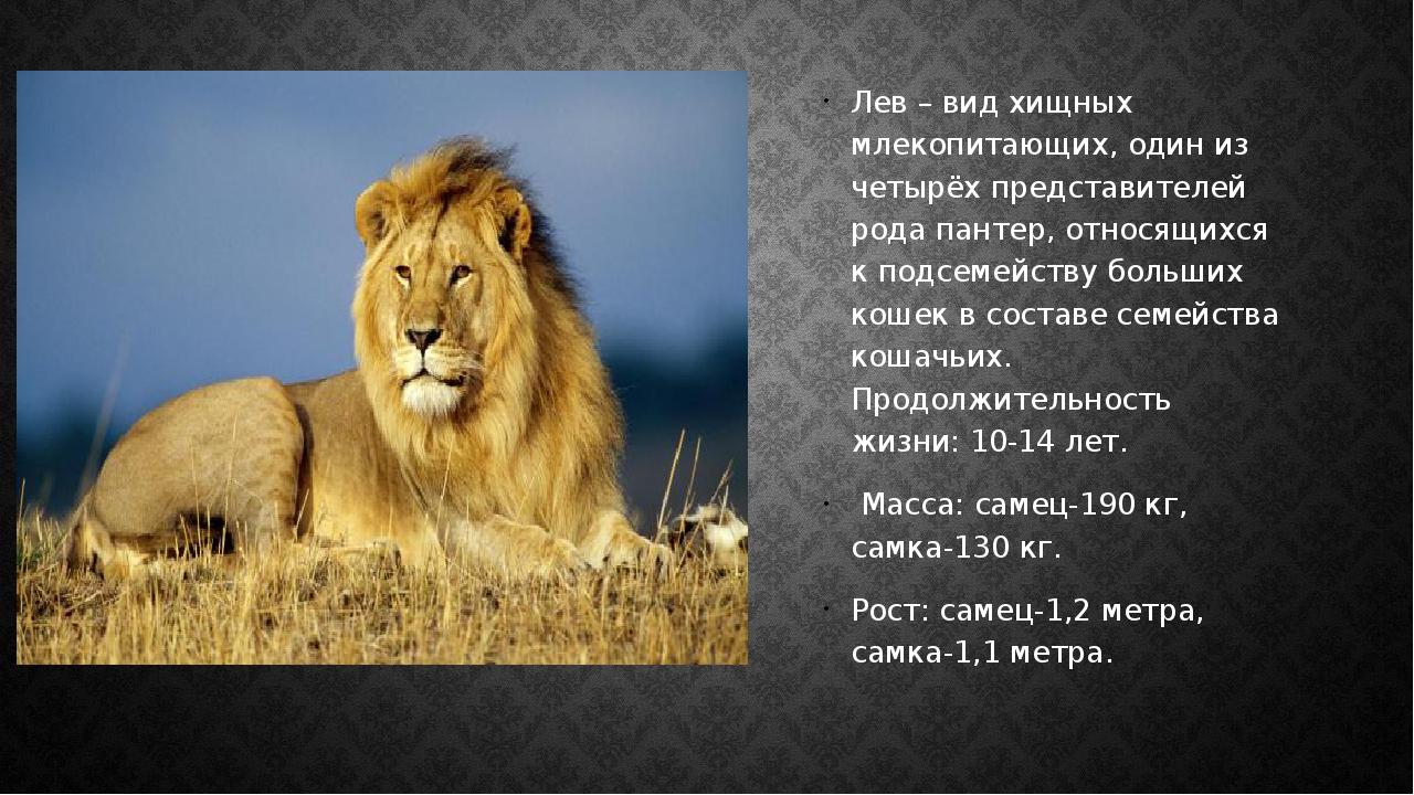 Лев – вид хищных млекопитающих, один из четырёх представителей рода пантер,...