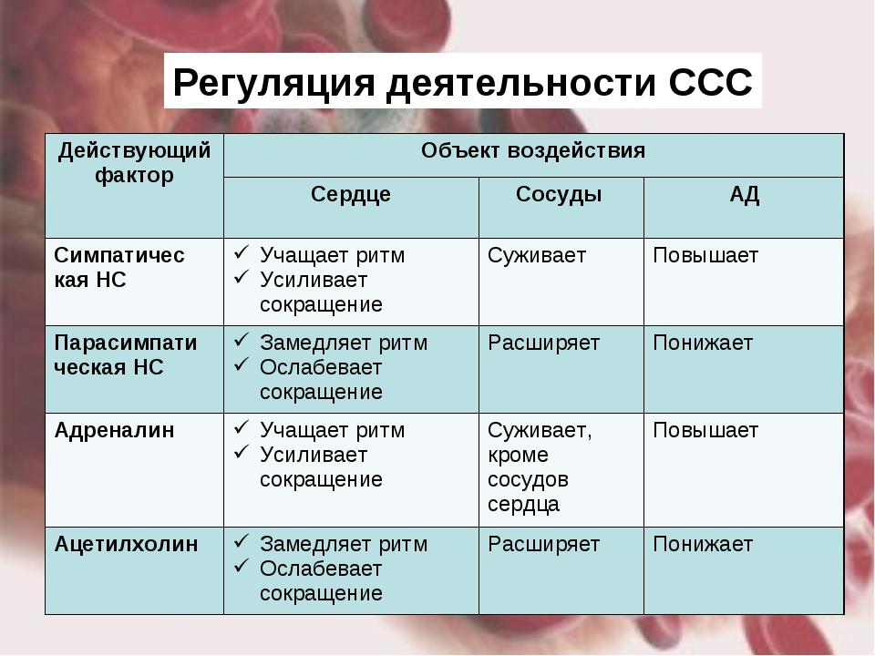 Регуляция деятельности ССС Действующий факторОбъект воздействия СердцеСосу...