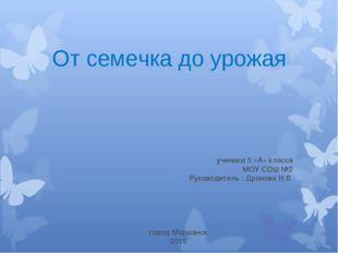 ученики 3 «А» класса МОУ СОШ №2 Руководитель : Дронова Н.В. От семечка до ур