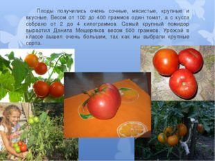 Плоды получились очень сочные, мясистые, крупные и вкусные. Весом от 100 до