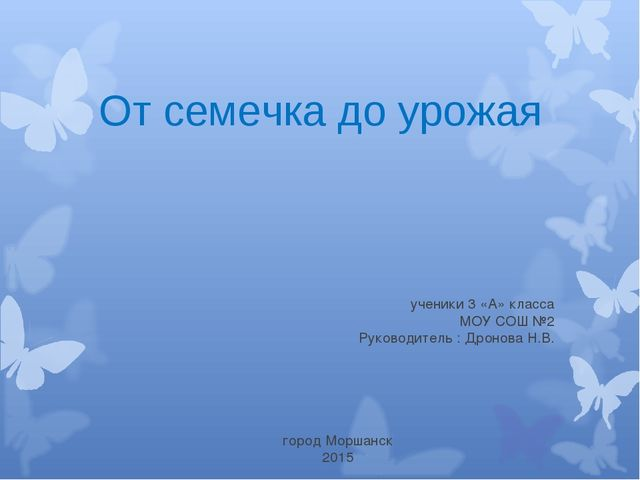 ученики 3 «А» класса МОУ СОШ №2 Руководитель : Дронова Н.В. От семечка до ур...