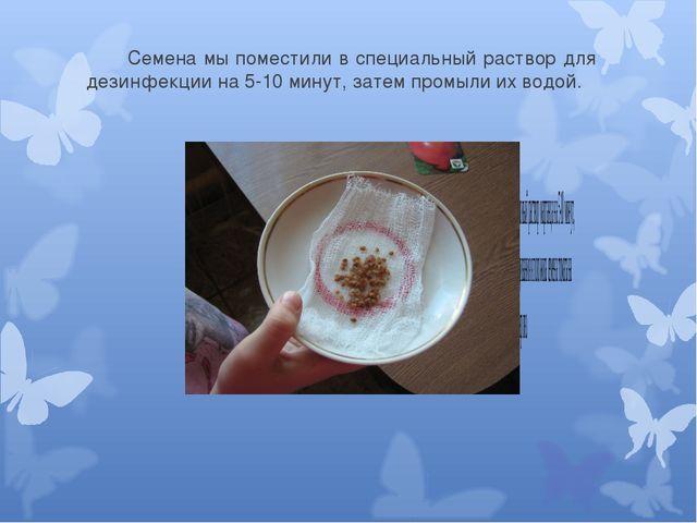 Семена мы поместили в специальный раствор для дезинфекции на 5-10 минут, за...