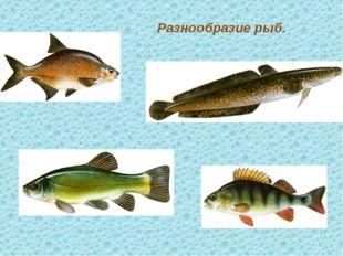 Разнообразие рыб. текст