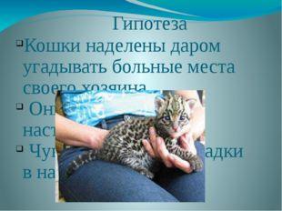 Гипотеза Кошки наделены даром угадывать больные места своего хозяина. Они чув