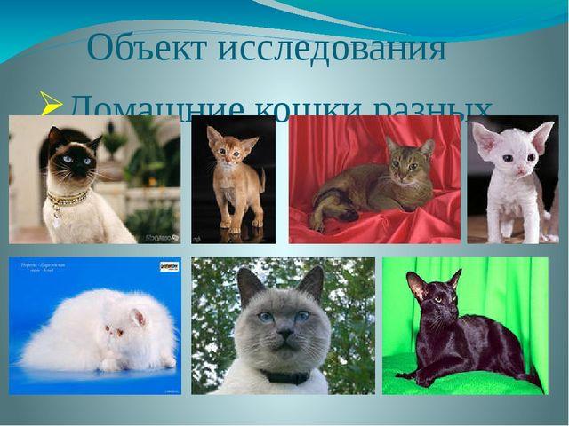 Объект исследования Домашние кошки разных пород
