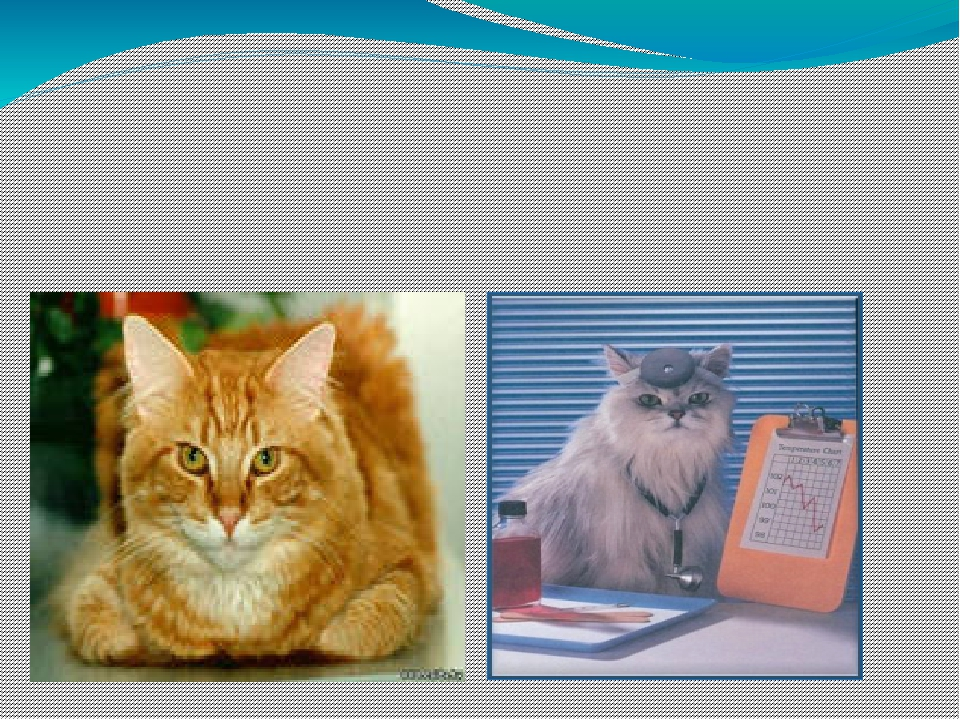 ИССЛЕДОВАТЕЛЬСКАЯ РАБОТА НА ТЕМУ: «Какую пользу приносят нам кошки?»