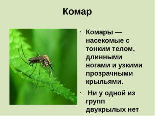 Комар Комары— насекомые с тонким телом, длинными ногами и узкими прозрачными