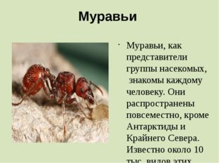 Муравьи Муравьи, как представители группы насекомых, знакомы каждому человек