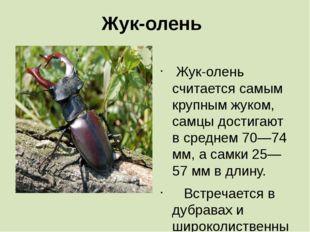 Жук-олень  Жук-олень считается самым крупным жуком, самцы достигают в средне