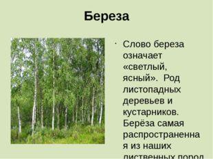 Береза Слово береза означает «светлый, ясный». Род листопадных деревьев и кус