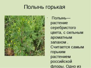 Полынь горькая Полынь— растение серебристого цвета, с сильным ароматным запах