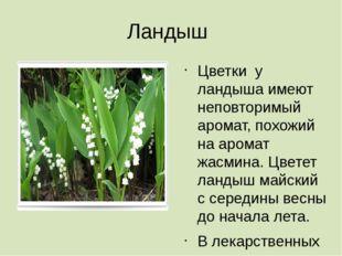 Ландыш Цветки у ландыша имеют неповторимый аромат, похожий на аромат жасмина.