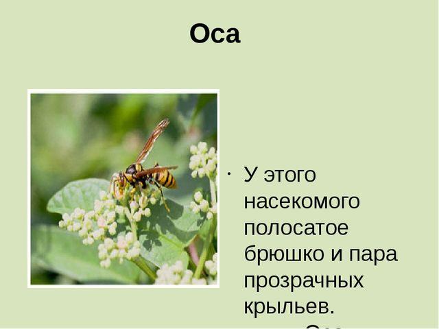Оса   У этого насекомого полосатое брюшко и пара прозрачных крыльев. ...