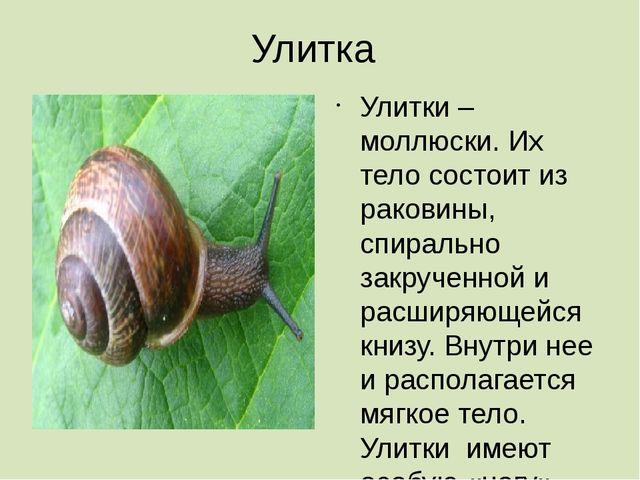 Улитка Улитки – моллюски. Их тело состоит из раковины, спирально закрученной...
