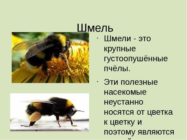 Шмель Шмели- это крупные густоопушённые пчёлы. Эти полезные насекомые неуст...
