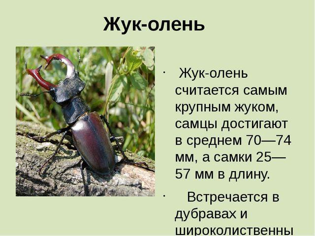Жук-олень  Жук-олень считается самым крупным жуком, самцы достигают в средне...