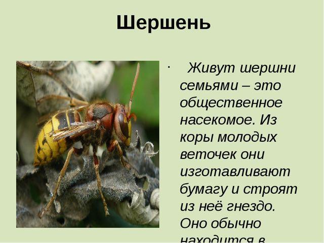 Шершень Живут шершни семьями – это общественное насекомое. Из коры молодых в...