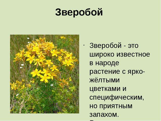 Зверобой Зверобой - это широко известное в народе растение с ярко-жёлтыми цве...
