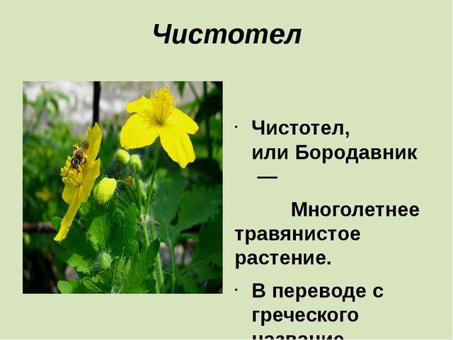 Чистотел  Чистотел, илиБородавник— Многолетнее травянистое растение. В п...