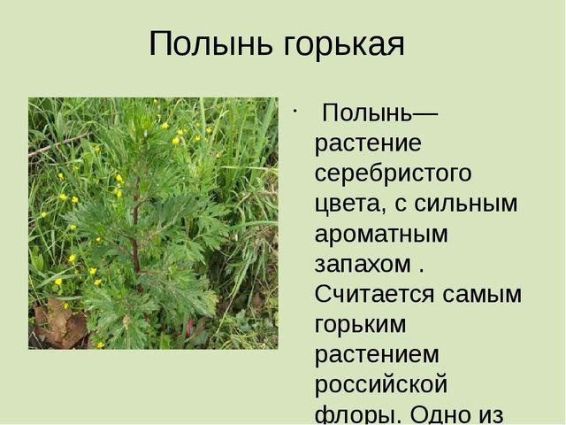 Полынь горькая Полынь— растение серебристого цвета, с сильным ароматным запах...