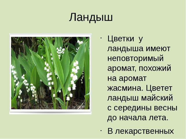 Ландыш Цветки у ландыша имеют неповторимый аромат, похожий на аромат жасмина....