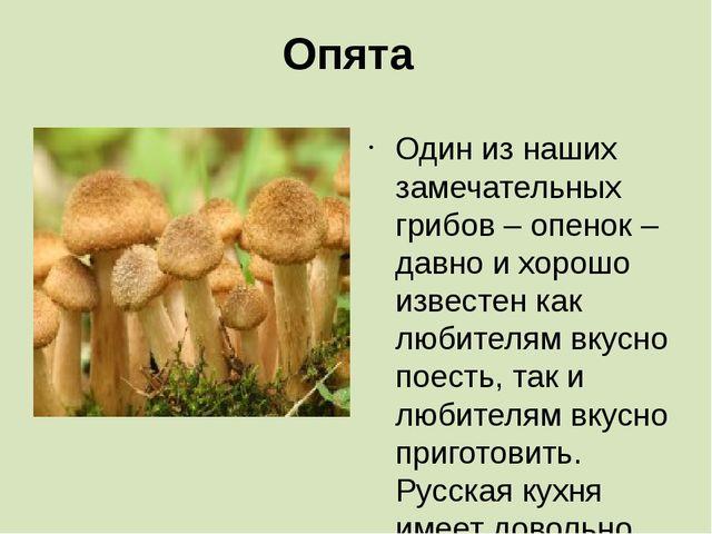 Опята Один из наших замечательных грибов – опенок – давно и хорошо известен к...