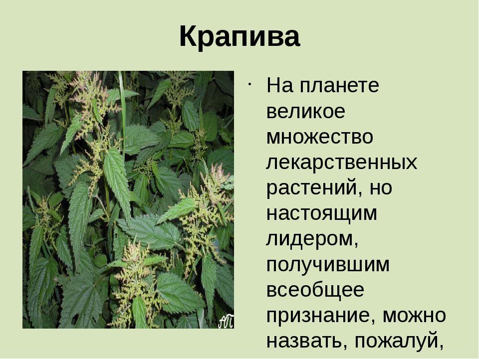 Крапива На планете великое множество лекарственных растений, но настоящим лид...