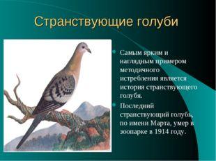 Странствующие голуби Самым ярким и наглядным примером методичного истребления